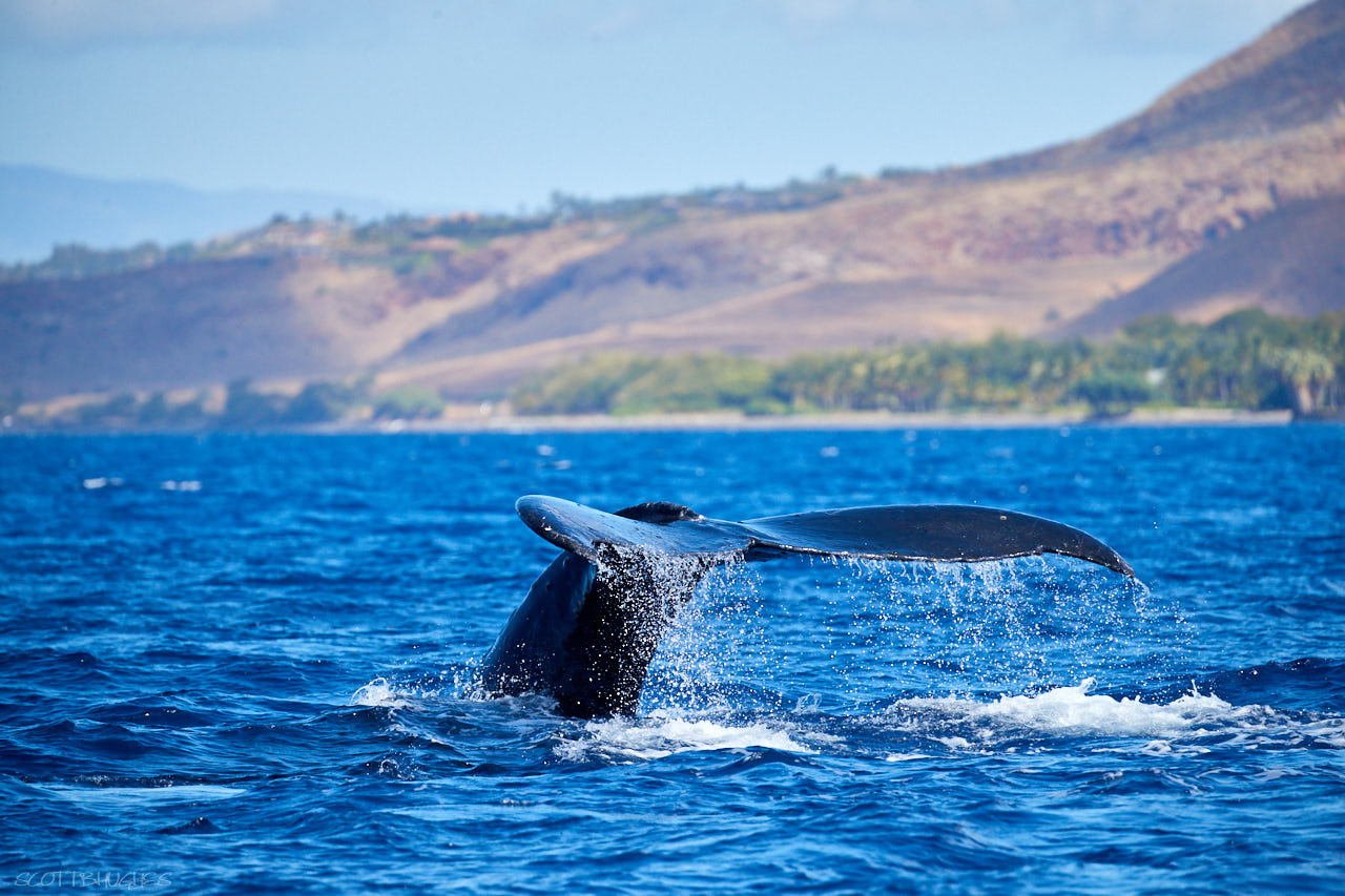 Whale Tail, offshore of Olowalu Maui